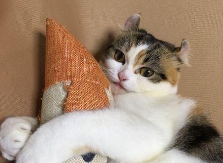 猫がおもちゃに興味を示さない時の心理4つ