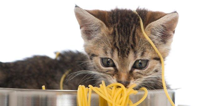 猫に蕎麦を食べさせてはいけない理由と対処法