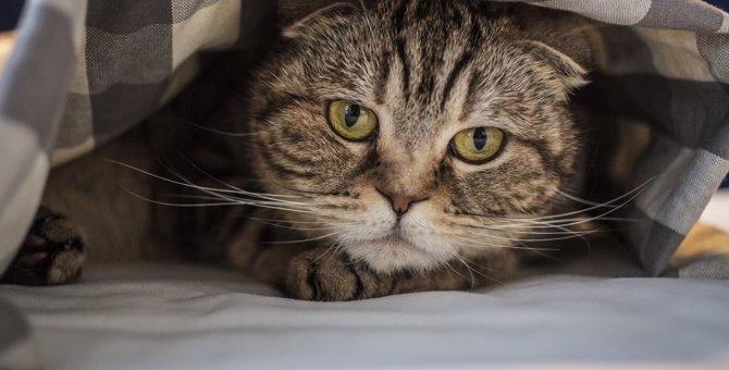 猫を『緊張させてしまう』シチュエーション2つ