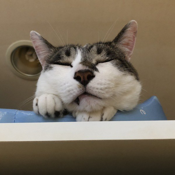 猫が『幸福感を得られること』5つ