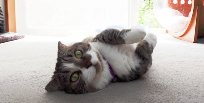 脱力~♪ヘソ天する猫さんに癒される♡