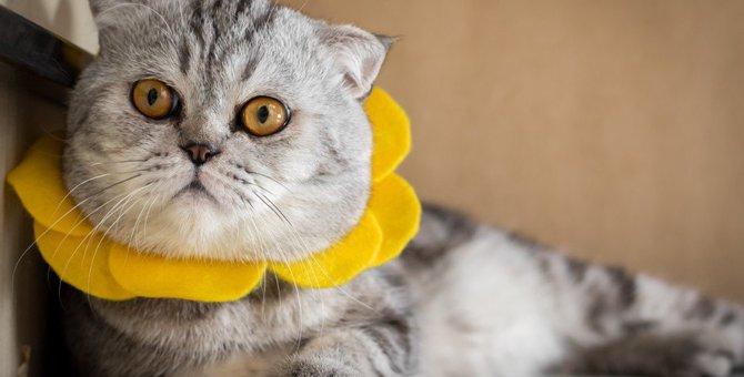 猫に絶対NGな『首輪』5選!こんな首輪は買うべきではない!