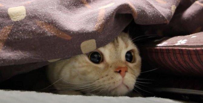 猫ちゃんのまんまるキラキラおめめ♡