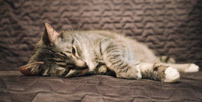 猫の死を招く可能性がある『絶対NGな節約方法』5選