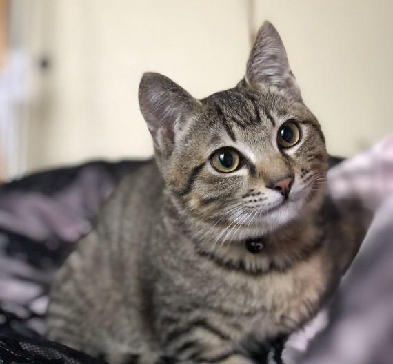 モテモテ♡猫がすぐになつく人の特徴5つ