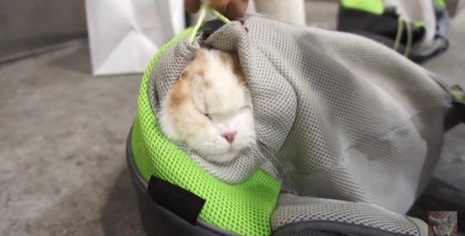 「もう帰りたい・・・!」疲れちゃった猫さんがまさかの行動に!