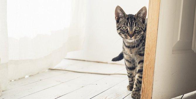 猫にドアを開けられないようにする対策4選