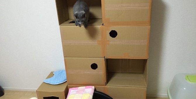 ダンボール箱を組み立てて「キャットタワー」を作ってみよう!
