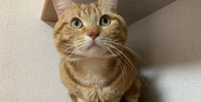 猫がトイレ掃除を近くでチェックする理由3つ
