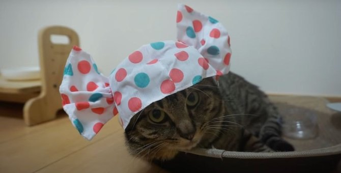 キャンディのかぶりものを被った猫ちゃんが可愛すぎる♡