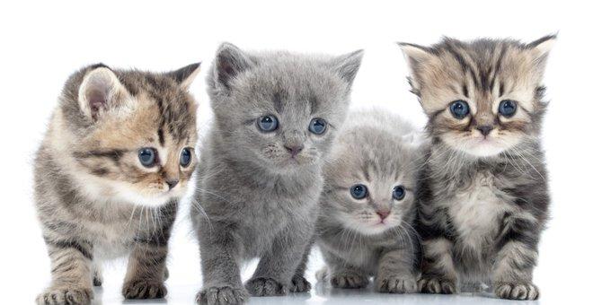 生後2カ月の子猫 育て方・注意点