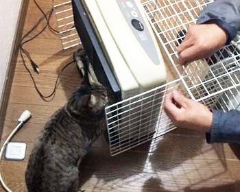 ストーブの前にガードを作って、猫を火傷や焦げから守ろう!100円ショップのアイテムで作れるガードの作り方