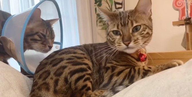 三角関係?大好きな猫さんに思いは届くのかー!?