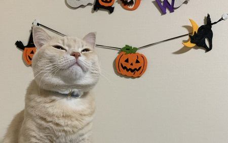 猫にはどんなご飯を与えればいいの?選び方のコツ4つ