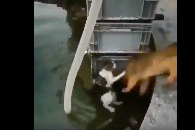 助けたのにその仕打ち!?溺れる猫と利用された犬の動画