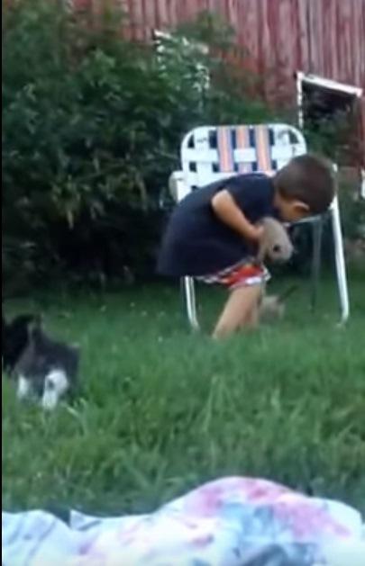 子猫を一箇所に集めたい男の子vsじっとしてられない子猫たち