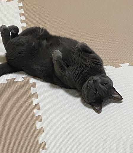 猫が床で『くねくね』する理由4つ