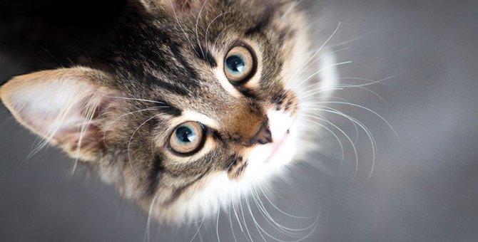 猫が『猫から』教えてもらう7つの事