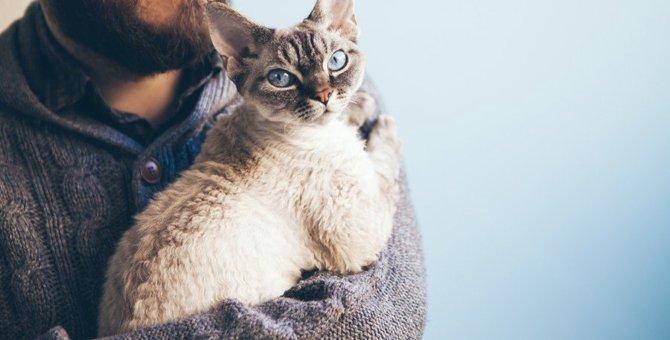 猫が人のそばから離れない理由7つ