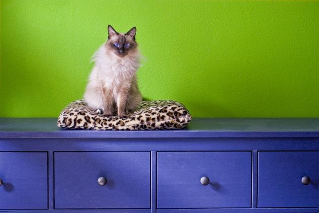 猫用クッションのオススメ4選!選び方や手作りの方法
