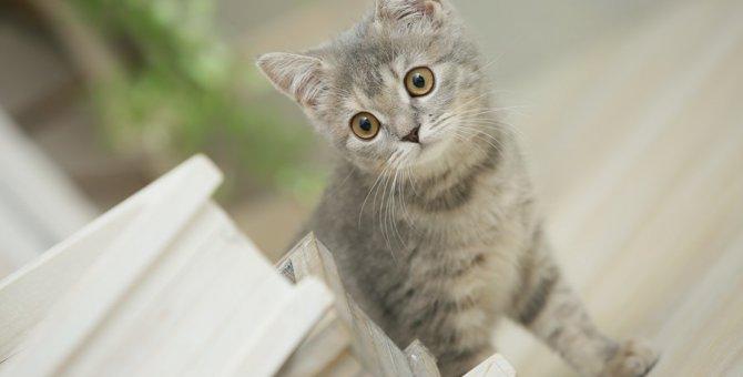 仔猫を初めて家族に迎える方に〜覚えておいてほしい事