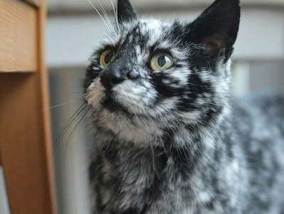 珍しい柄の猫20選!不思議な模様の理由