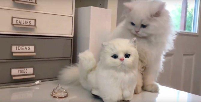 えっ…わたし?自分とそっくりな人形を目の前にした猫