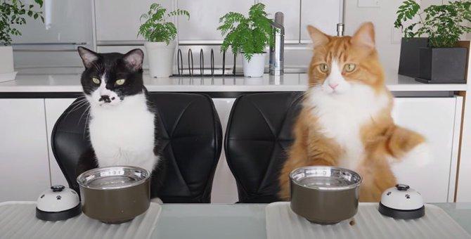 まるでコント!仲良し3猫のベル鳴らし芸♡