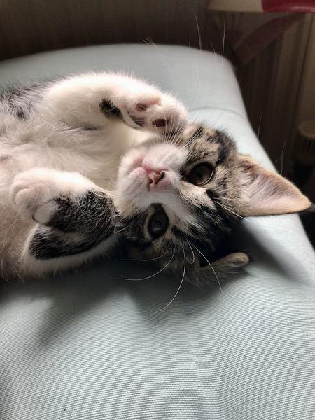猫を飼い始めてビックリすること4選