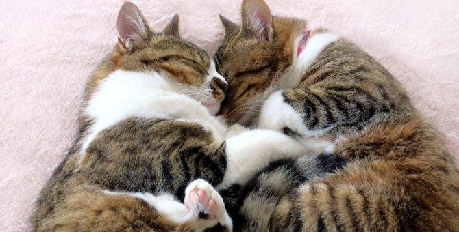 二匹目の猫をお迎えする時の性別やタイミング相性の見方