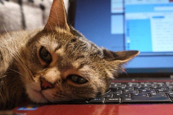 猫と一緒に働ける会社に憧れ…メリットデメリットを考える