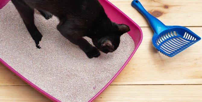 猫が『穴掘り』する仕草に隠された2つの心理!よく掘る場所にヒントが?