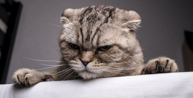 猫に信頼されない飼い主がやりがちなコト4つ