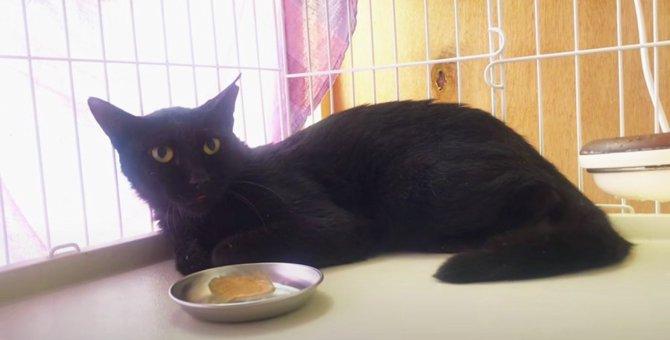 海辺で命の危機に瀕した黒猫…絶食状態に陥った原因に驚き!