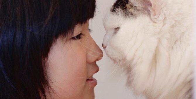 猫は人間の言葉を理解しているのか?