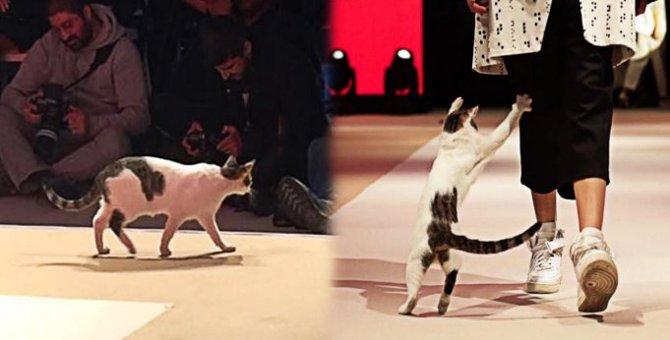 世界的なファションショーに猫が登場!その華麗な姿に胸キュン♡