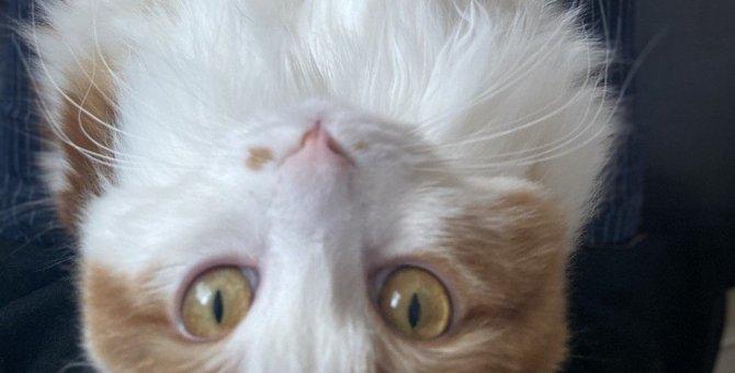 猫が『膝に乗ってくるとき』の心理4選!愛情?要求?実は愛猫からの密かなサインの可能性も?