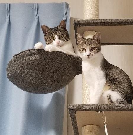 猫のケガや事故の可能性も…キャットタワーの注意点5つ