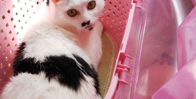 災害時、愛猫のための『備え』できていますか?