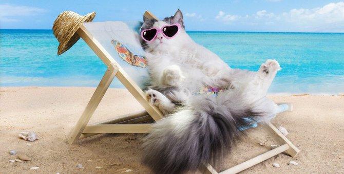 猫にしてはいけない『夏のNG行為』4選
