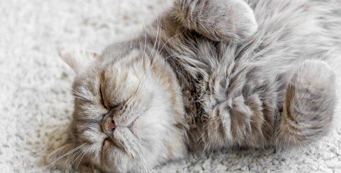 「猫の開き」が可愛すぎる!緊張感ゼロの寝姿