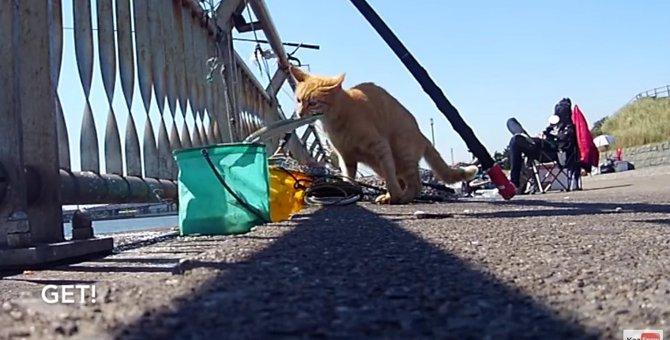 「いまのうちだニャ♪」猫ちゃん、コソッと魚を失敬!