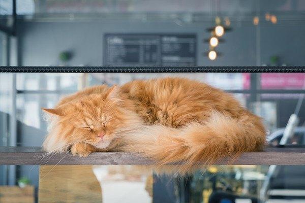 猫にまつわるアルバイト2選!必要な資格やお仕事内容