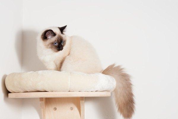 猫が喜ぶ壁面を使ったキャットウォークの作り方やおススメ商品