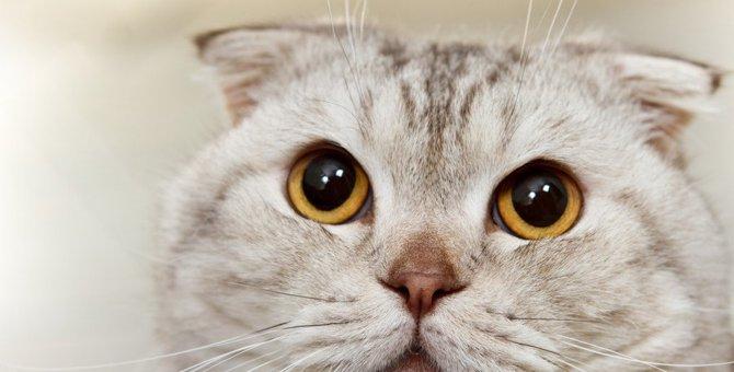 あなたは大丈夫?猫を飼う人が絶対やってはいけない「NG行為」3つ