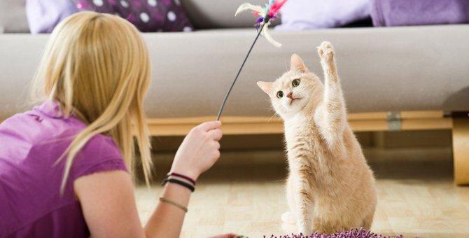 猫の危険な事故を招く『おもちゃ』の特徴3つ