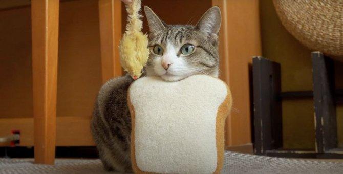 目の前におもちゃがきても動じない猫ちゃん