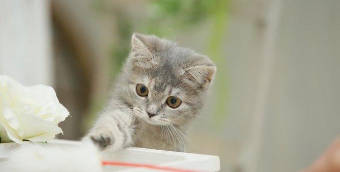 猫と上手に遊ぶコツとおすすめグッズやアプリ