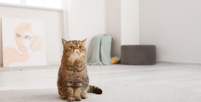 猫が『嬉しょん』するときの原因と4つの対策