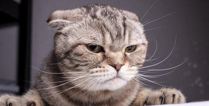 不満を持った猫の『抗議サイン』5つ